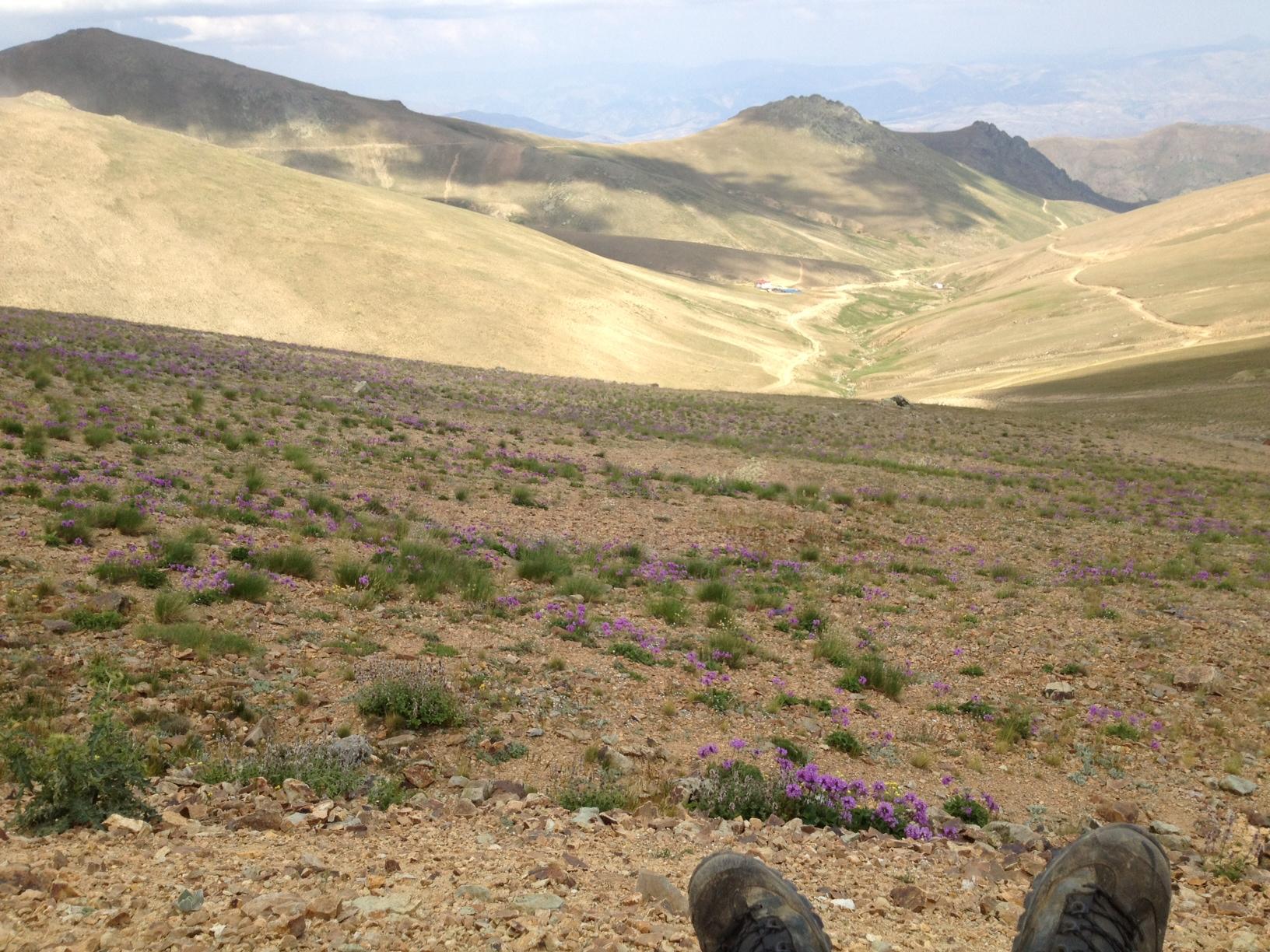 Växtplats: bergssluttning i västra turkiet – vi tre & trädgÃ¥rd