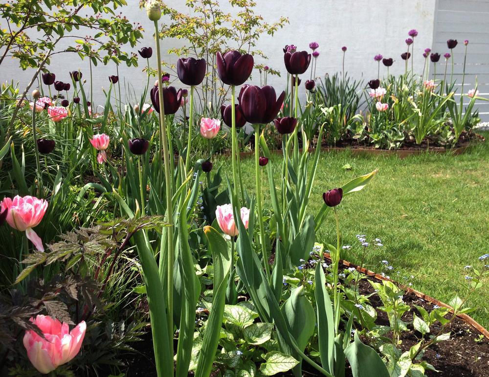 rabatter i trädgård