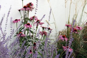Rysk lavendel och röd rudbeckia