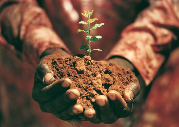 Vi planterar träd för varje uppdrag 2010