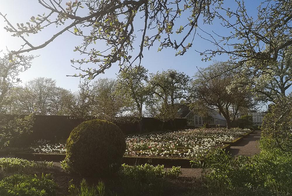 Lustfyllt i Lustträdgården i Sofiero